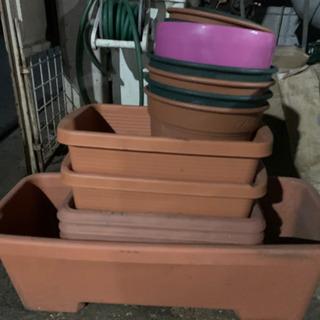 植木鉢少し大きめ