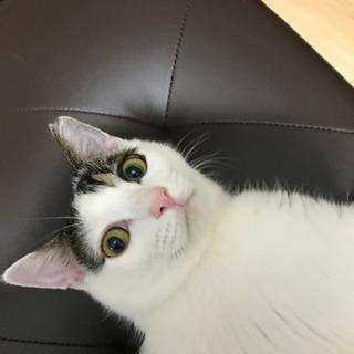 美猫てんちゃん