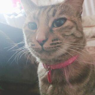 諫早市内か大村市の方の里親さん募集中 - 猫