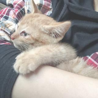 子猫 恐らく4ヶ月