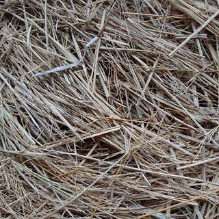 国産の藁です 家庭菜園にどうですか?