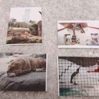 動物 写真