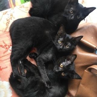 黒猫 1歳半