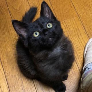 甘えん坊 黒猫三兄弟♪  キャンセルの為募集再開!