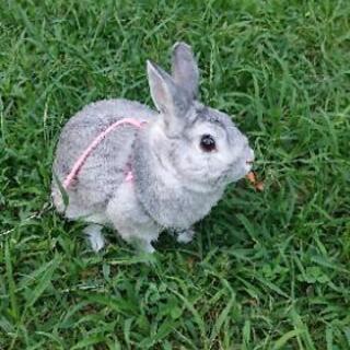 ウサギ 1歳2ヶ月♂