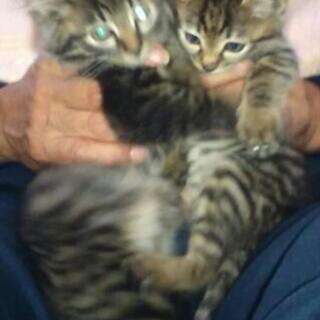 家族として迎えてくださる方急募です‼姉妹猫であんずとすももと呼ん...