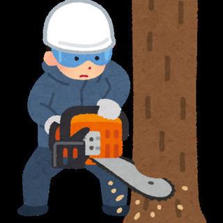 木の伐採、お庭の大きな木お切りします。