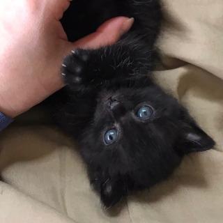 ふわふわ黒子猫ちゃん、里親さん募集中です!!