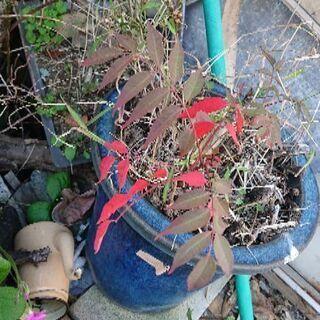 鉢や盆栽の鉢