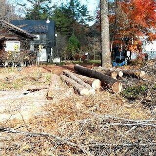 困った伐倒 伐採、承ります。