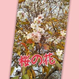 桜の花(枝)