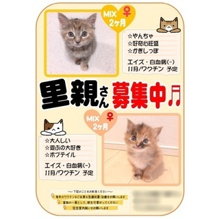 生後2ヶ月の姉妹子猫の里親募集♬︎