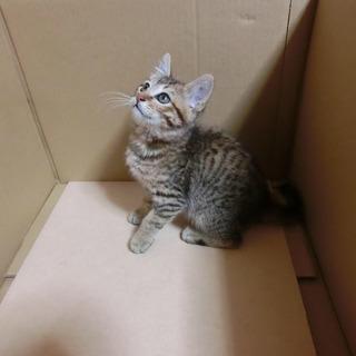 3ヶ月の子猫里親募集中 − 長崎県