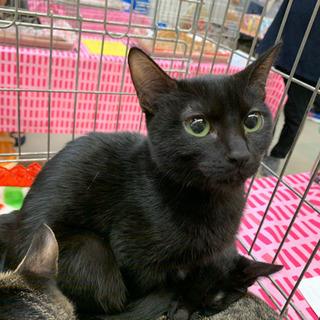 クリクリお目めの可愛い黒ネコ3姉妹