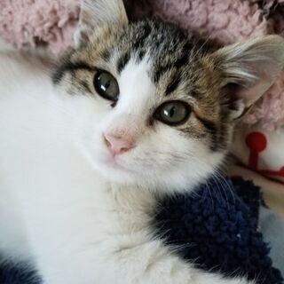 おとなしい姉妹の子猫です - 佐世保市