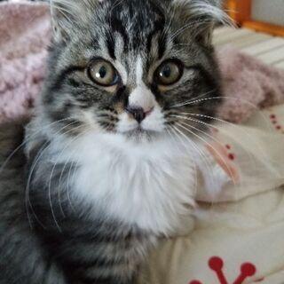 おとなしい姉妹の子猫です - 猫