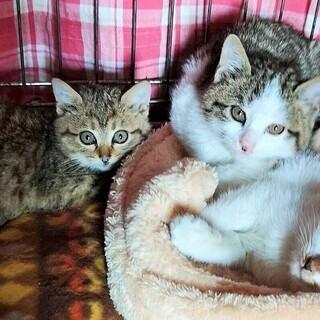 廃墟で生まれた3兄妹(1.5ヵ月)