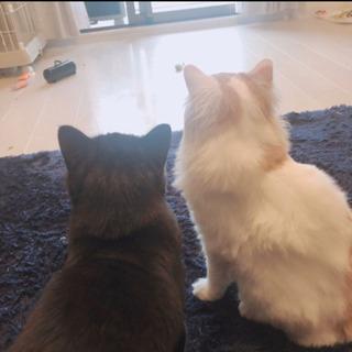 【急募】猫さん 2匹  男の子