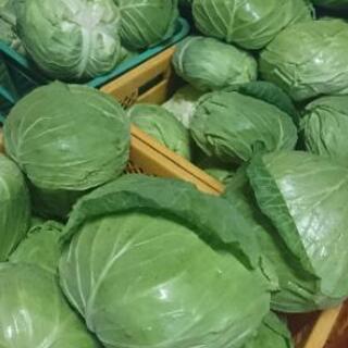 農家直送新鮮キャベツ10キロ500円