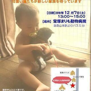 猫のふれあい譲渡会 in 宝塚山手台