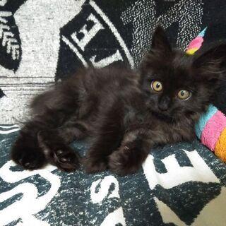生後1ヶ月過ぎくらいの子猫
