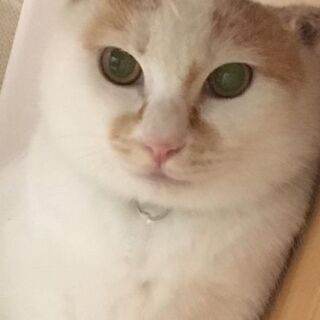 お話し中。保護猫を迎えよう! 費用負担無し! 生後5ヶ月オス。N...