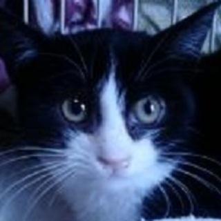 仔猫4か月・白黒・サバ白