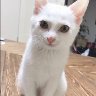 綺麗な白猫ちゃん