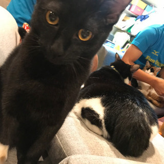 やんちゃな黒猫♂7ヶ月(里親さん決定しました!)