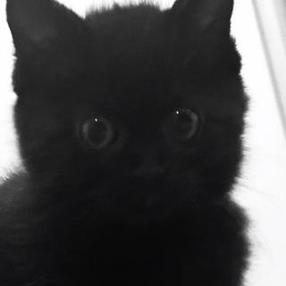 やんちゃ盛り黒猫4兄妹 2か月