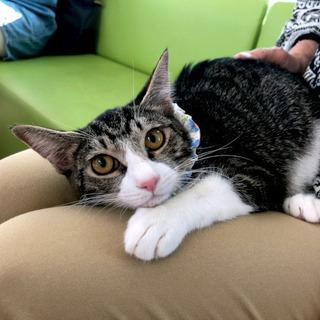1月12日(日) 猫の譲渡会 名古屋市港区 港生涯学習センター ...