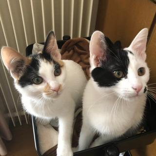 7月下旬生まれの2匹の子猫ちゃん