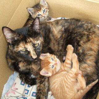 元気な仔猫2匹(生後1か月)と母猫(2~3歳)を保護中です。