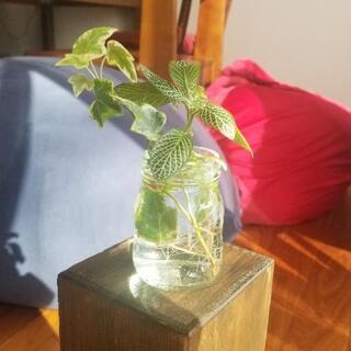 このまま飾れる♪観葉植物セット