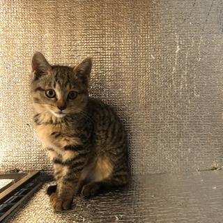 野良猫の子猫を保護を保護しました - 猫