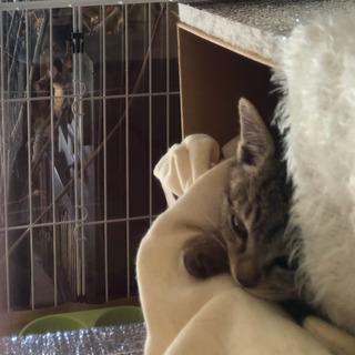 野良猫の子猫を保護を保護しましたの画像
