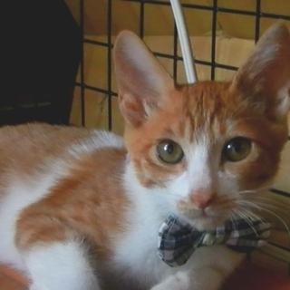 【募集停止中です】4カ月の子猫 男の子です