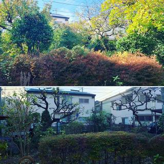 【横浜 植木屋】庭木の剪定