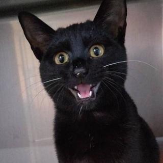 里親決定☆性格◎避妊済みの黒猫ももちゃん