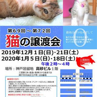 神戸市三ノ宮で猫の譲渡会