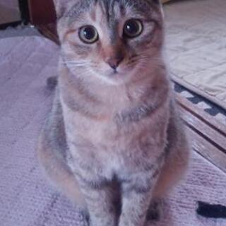5月生まれ麦わら猫ひとちゃん