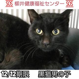 保健所収容12/12まで!優しい黒猫くんを助けて!