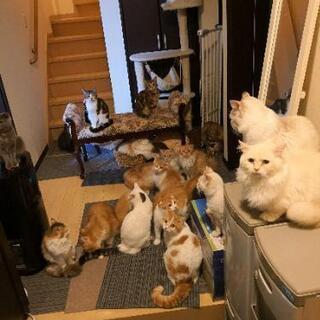 ブリーダー猫、縮小のため格安放出