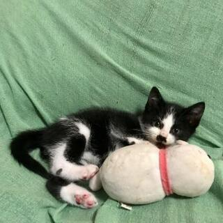 人慣れ抜群の白黒の子猫