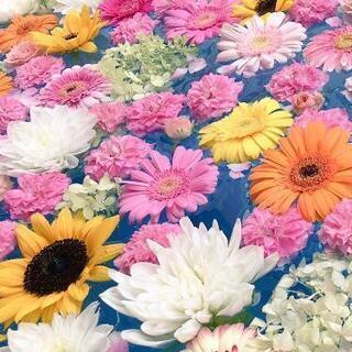 お花 譲ってください