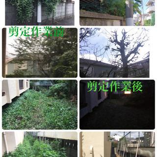 庭木の剪定 伐採、除草、草刈りなど庭の手入れ店(所沢市 狭山市入...