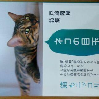 【消費税サービス】ネコの目玉!