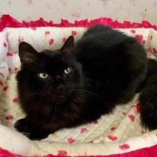 ふさふさモコモコの黒猫さんです♪