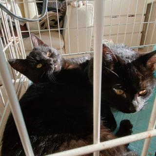 黒猫の兄弟です - 網走市