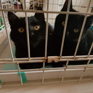 黒猫の兄弟ですの画像